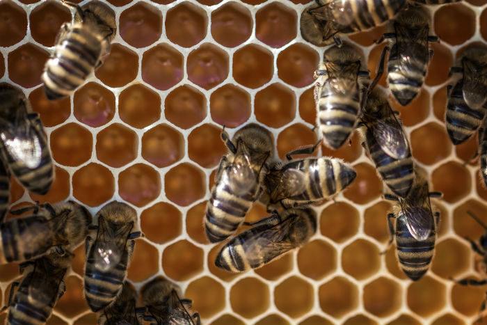 Curiosidades sobre las abejas - UAGA