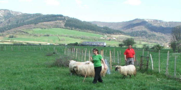 pastora joven y pastor al fondo con ovejas