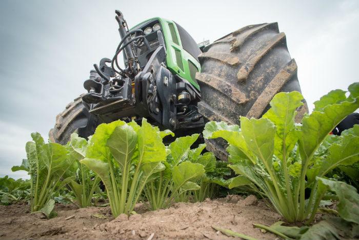remolacha y tractor