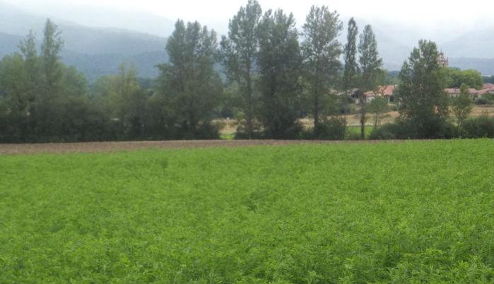 Finca de alfalfa