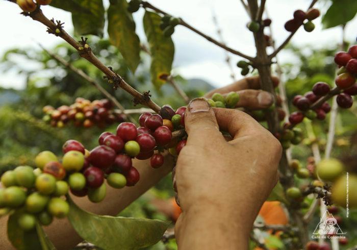 uaga recibe la visita de productores de café colombianos uaga