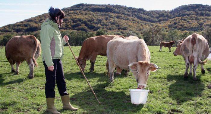 Ganadera joven con vacas