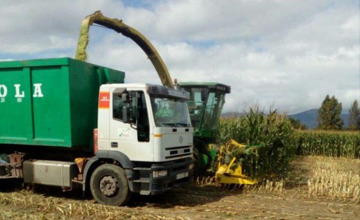 recolección de maíz