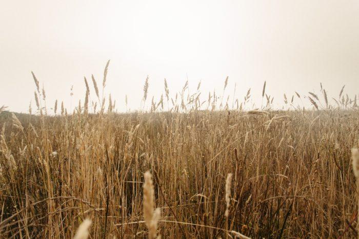 cultivo herbáceo