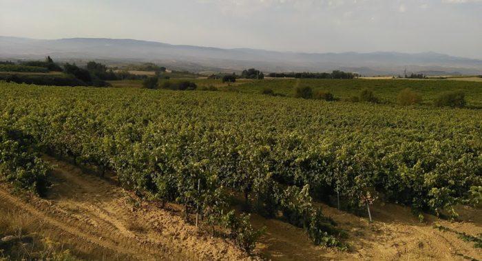 Viña de Rioja Alavesa