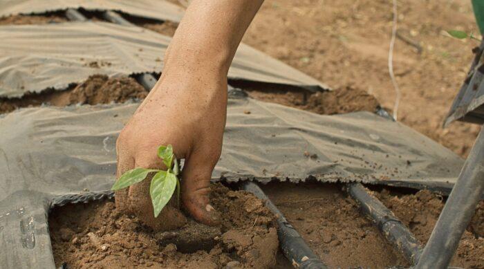 mano, tierra, planta