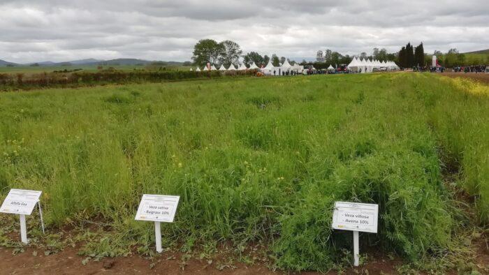 Finca La Ilarra de experimentación en herbáceos