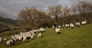 Ganadera con ovejas en el campo