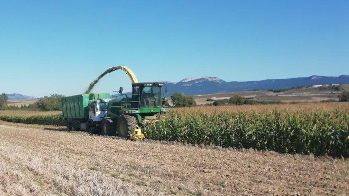 cosecha maíz 2019