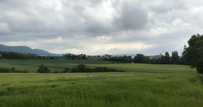 paisaje de cereal