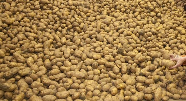 patatas en almacén