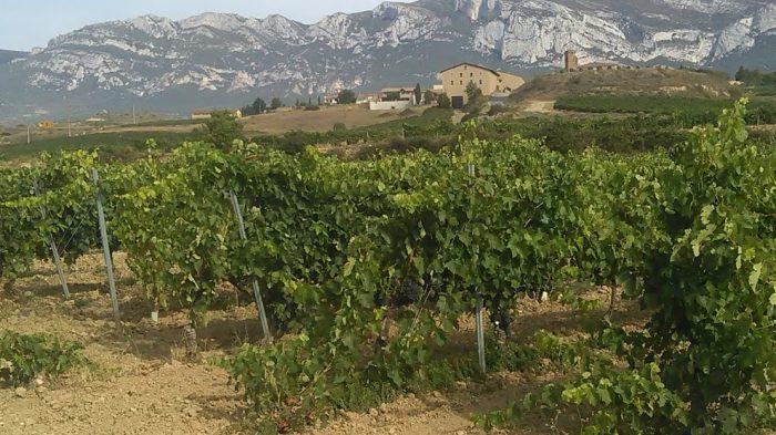 viñas de Rioja Alavesa